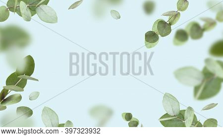 Flying Fresh Green Branches Of Eucalyptus On Light Blue Background. Flat Lay, Top View, Mock Up. Nat