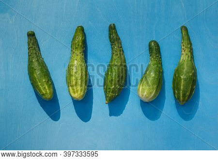 Fresh Cucumbers An Funny Curved Shape. Layout On A Bright Blue Background With Sharp Shadows