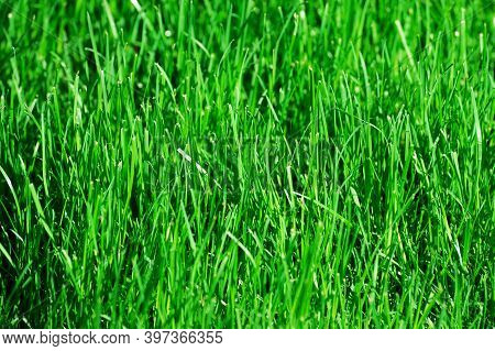 Close Up On Green Grass As Background