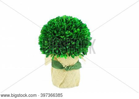 Green Plant Decoration Isolated On White Background