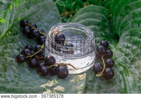 Black Currant Berries With Transparent Cream Gel On A Large Green Leaf Hosts.  Ripe Black Currant Be