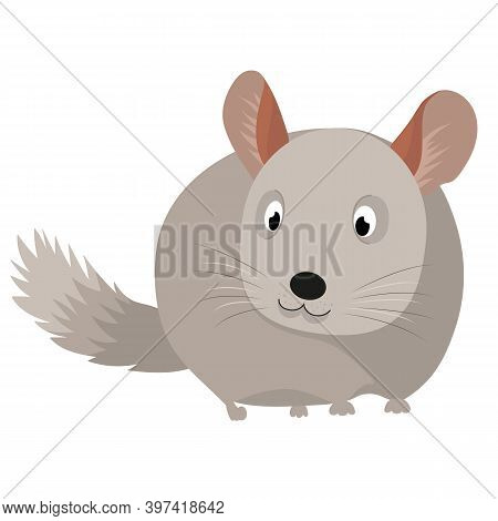 Vector Illustration Of A Chinchilla. Children's Illustration Of A Pet. Gray, Cute, And Fluffy Chinch