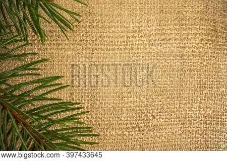 Green Spruce Branches Lie On The Fabric In Brown Tones. The Texture Of The Fabric Is Clearly Visible