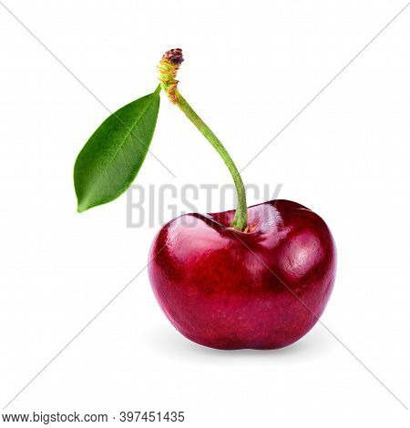 Cherry Isolated On White Background. Sweet Cherries With Clipping Path.