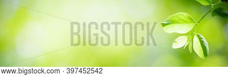 Green Leaf Nature On Blurred Greenery Background. Cover Pages. Natural Background. Close-up Of Macro