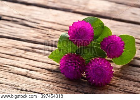 Close Up Purple Globe Amaranth Flower On Wood Plate
