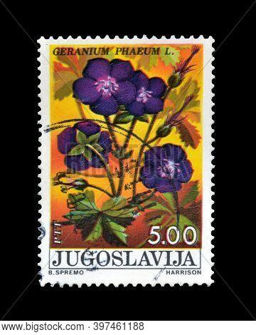 Yugoslavia - Circa 1975 : Cancelled Postage Stamp Printed By Yugoslavia, That Shows Geranium Flower,
