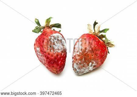 Two Mouldy Strawberries. Rotten And Uneatable. Isolated On White Background.