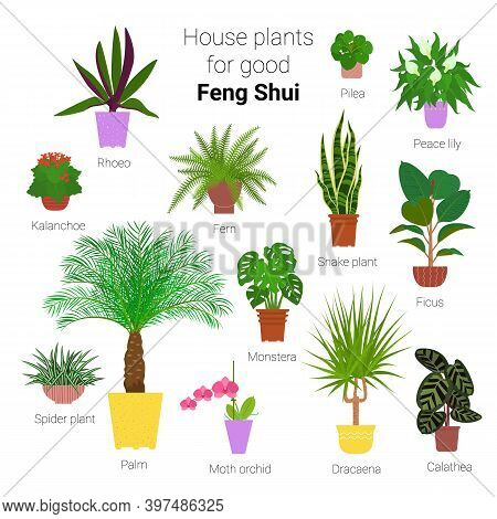 Colorful Set Of Various Potted Houseplants For Good Feng Shui. Succulents, Evergreen Plants In Plant