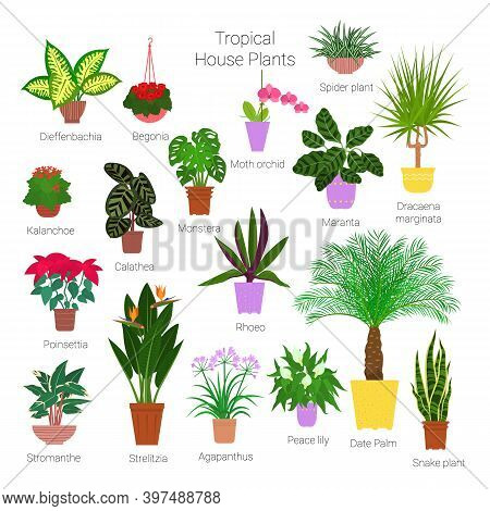 Colorful Set Of Various Potted Tropical Houseplants. Succulents, Evergreen Plants In Planters. Flat