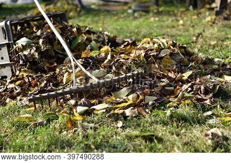 A Stack Of Accumulated Yellow Fallen Leaves And Rakes