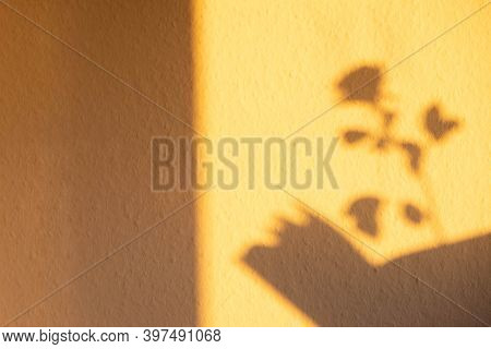 Yellow Shadow From Rose Flower On The Wall In The Morning