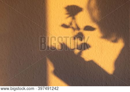 Shadow From Rose Flower And Silhouette Of A Girl On The Wall In The Morning