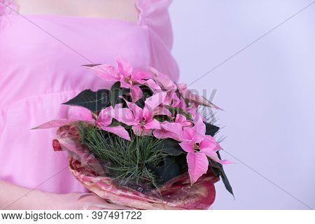 A Young Girl In A Pink Dress Holds A Bouquet Of Christmas Flowers On A White Background