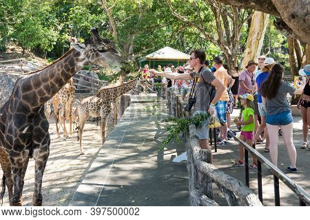 Pattaya, Thailand - February 01, 2017: View Of Tourists Feeding Giraffes In Khao Kheow Open Zoo In P