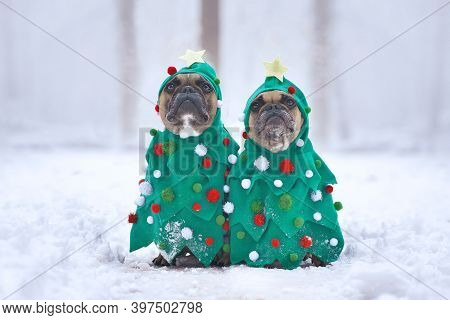 Pair Of French Bulldog Dogs Wearing Festive Christmas Tree Costumes With Baubles And Stars Sitting T