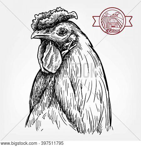 Chicken Breeding. Animal Husbandry. Livestock. Vector Sketch On A White