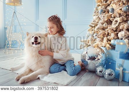 Little Cute Girl With A White Malamute Dog Near Christmas Tree.