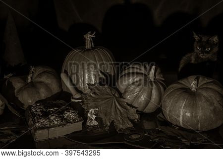Cute Black Cat Sitting On The Table Among Pumpkins