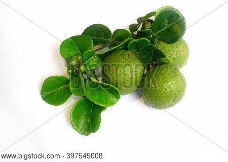 Kaffir Lime Or Citrus Hystrix Small And Large Sizes. There Are Leaves. Focus Selected, White Backgro