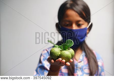 Yogyakarta, Indonesia. November 29, 2020: Kaffir Lime Or Citrus Hystrix Held The Hand Of A Young Wom