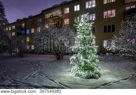 Christmas Tree in Snow in Stockholm