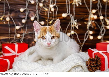 Cat In A Xmas Interior At Home. Funny Kitty Waiting For Santa Claus. Fluffy Cat Sitting In Christmas