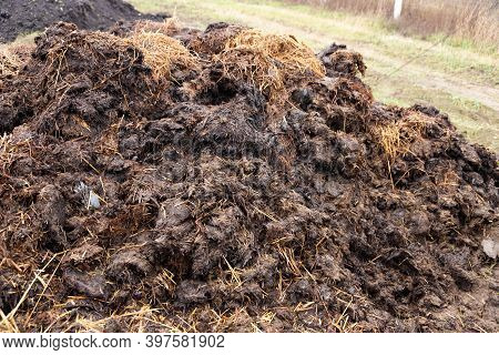 A Pile Of Manure On A Farm Field. The Concept Of Environmentally Friendly Products.