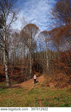 Dream Autumn In Romania. Deciduous Forests Present Their Colorful Moments In These Days Of October T