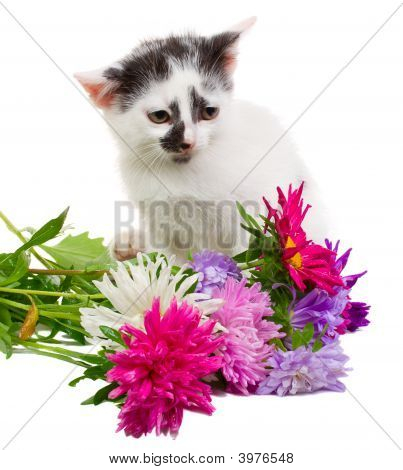 kitten sitting with flowers isolated on white poster