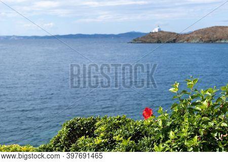 Red Hibiscus, Rose Mallow Flower. Blur Kea, Tzia Island Greece, Space.