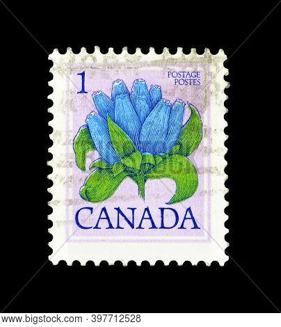 Canada - Circa 1977 : Cancelled Postage Stamp Printed By Canada, That Shows Bottle Gentian, Gentiana