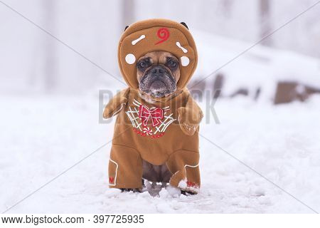 French Bulldog Dog Dressed Up With Funny Christmas Gingerbread Full Body Costume With Arms And Hat I