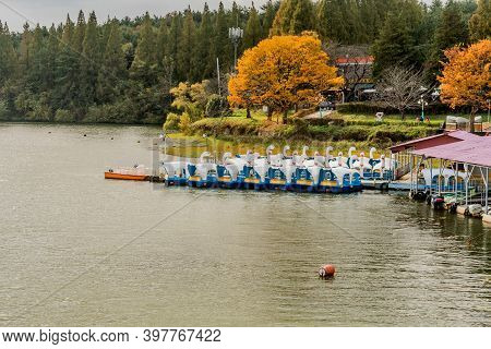 Gunsan, South Korea; November 3, 2020: Paddle Boats Docked At Boathouse On Lake With And Gingko Tree