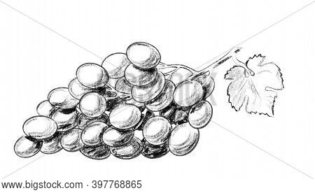 Black And White Grape With Leaf. Hand Drawn Digital Illustration Like As Pencil Drawing. Good Elemen