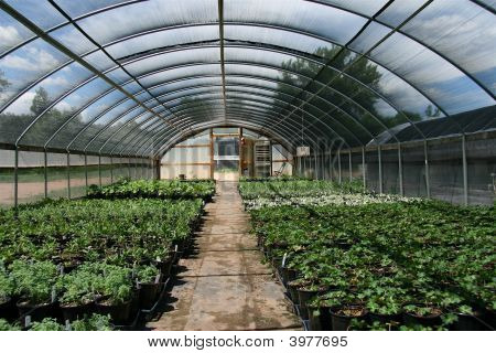 Shaded Dome Greenhouse