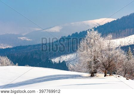 Trees In Hoarfrost On A Snow Covered Hill. Fairy Tale Winter Mountain Landscape. Foggy Weather On A