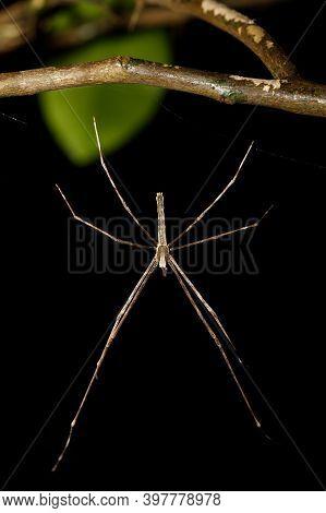 Orb-weaver Spider Spider, Masoala National Park, Toamasina Province, Madagascar Wildlife And Wildern