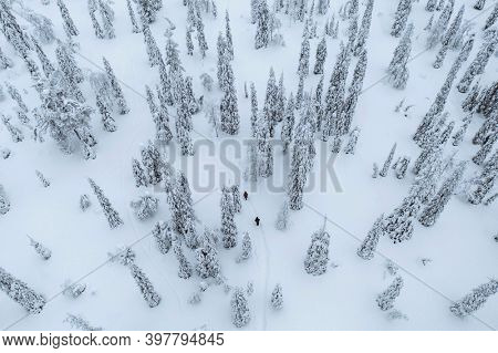 Drone shot of people trekking in a snowy forest in Lapland, Finland