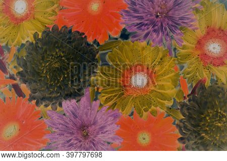 Closeup of colorful flowers in negative filter floating on water background