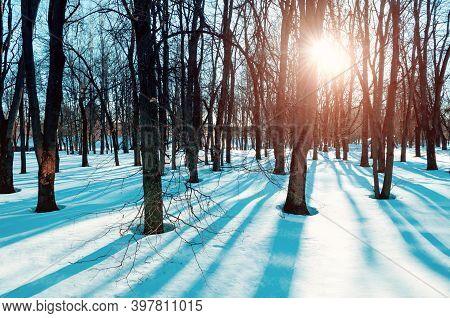 Christmas morning, natural Christmas landscape, Christmas nature. Winter Christmas landscape, winter Christmas park in sunny evening. Winter snowy park scene