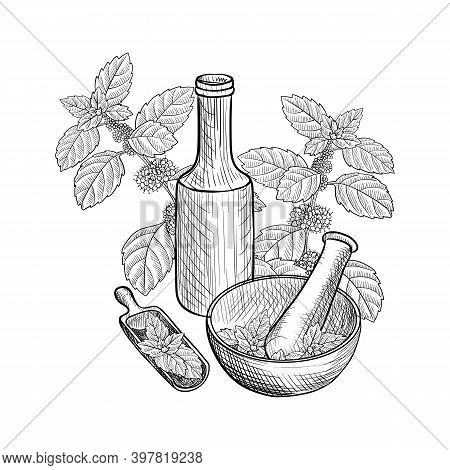 Vector Drawing Menthol Essential Oil, Mint, Bottle, Mortar And Pestle At White Background, Hand Draw