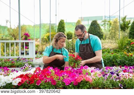 Pensive Professional Gardeners Discussing Blooming Plants And Standing. Bearded Man Holding Potted P
