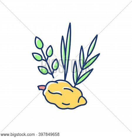 Four Species Rgb Color Icon. Jewish Holiday. Etrog, Lulav, Hadas, Arava. Sukkot Week-long Festival.