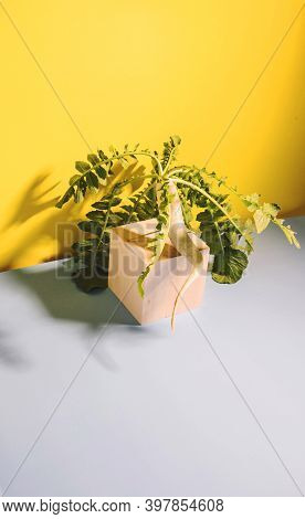 One Daikon Radish Root Crop Sits On A Wooden Cube On A Yellow Background. Copy Space