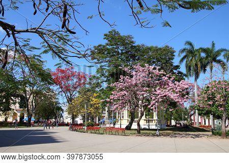 Santa Clara, Cuba - February 21, 2011: Blooming Trees In Santa Clara, Cuba. Santa Clara Is One Of Fi