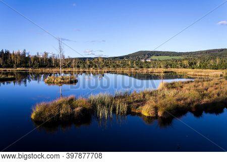 Moor Chalupska Slat With Birch And Pine Trees During Sunset, Sumava National Park, Czech Republic, S