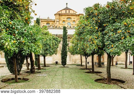 Court Of Oranges,cordoba,andalusia,spain.orange Trees In The Middle Of A Town Ready To Harvest. Oran