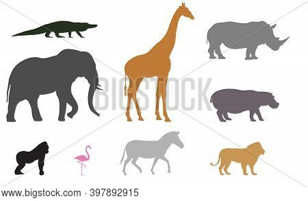 African Animal Silhouettes | Exotic Wildlife Drawn To Scale | Safari Animal Outlines | Zoo Icons | A