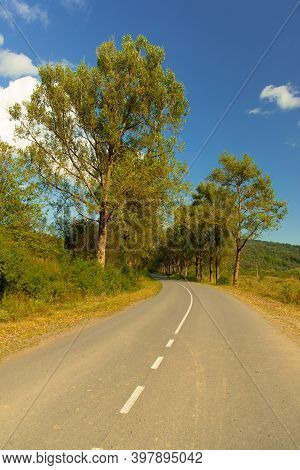 Outskirts Car Road Route High Trees Alley Way Clear Weather Summer Day Time Vertical